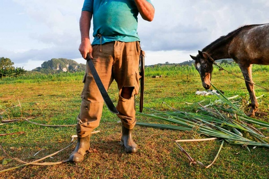horse and farmer in cuba