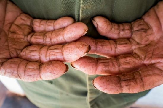 broken hands of a farmer in cuban raw hourse