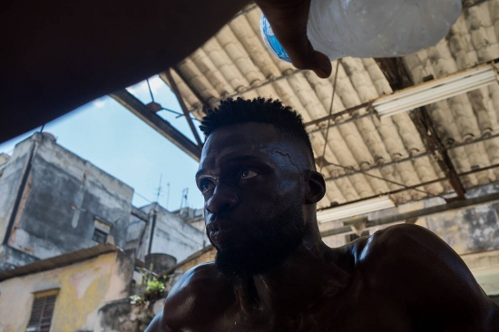 cuban boxer drinking water