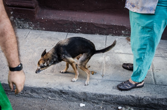 cuban dog in the street,  street photography in cuba