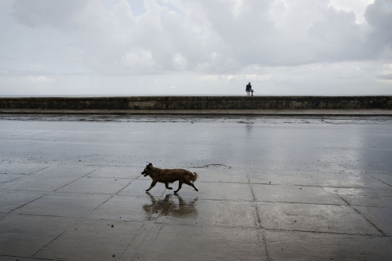 dogs in cuba in a wet day, picture of cuba