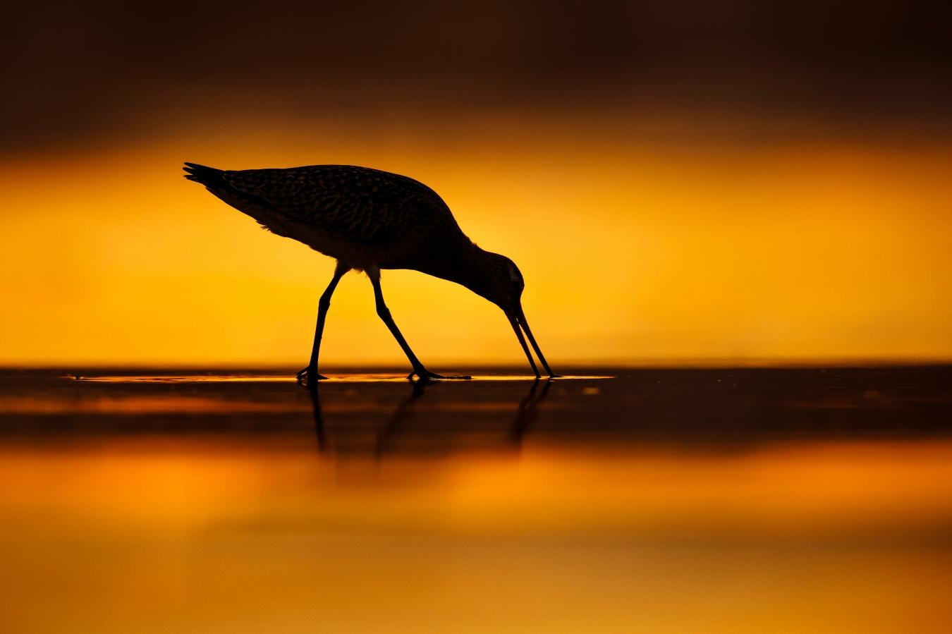 Peace of mind - Mario Suarez - Portfolio Natural, Fotografía de Naturaleza de Autor