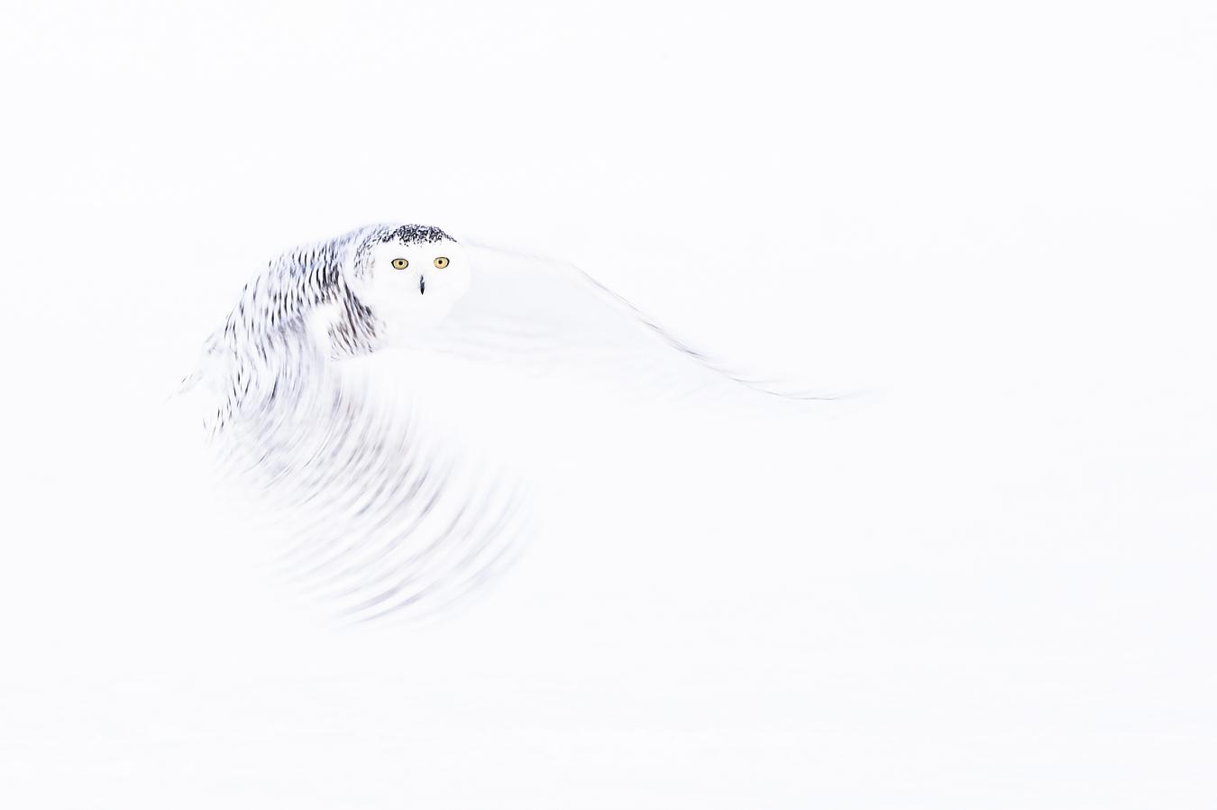 Snowy at Slow Motion - Ignacio Medem - Portfolio Natural, Fotografía de Naturaleza de Autor