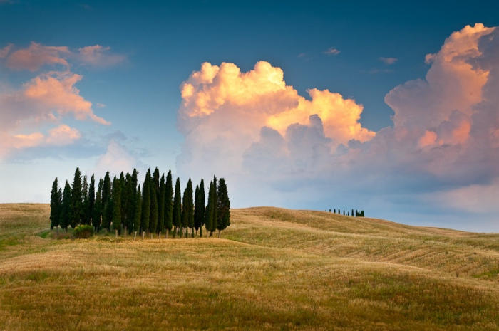 El rebaño. Paisaje de la Toscana (Italia)