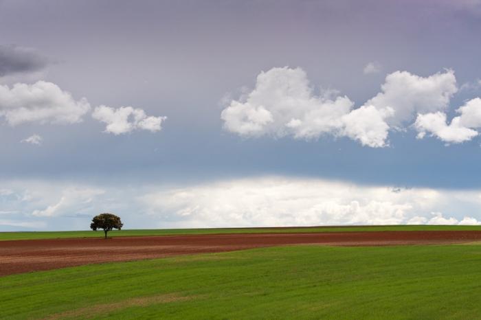Lo mismo llueve. Arbol solitario con cielo de tormenta