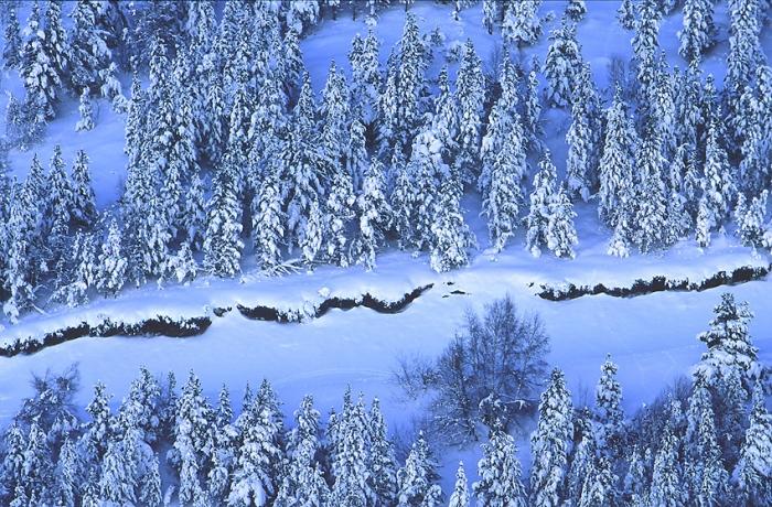 Azules de invierno