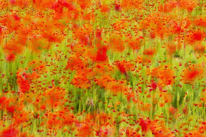 David Frutos Egea · PoppyArt