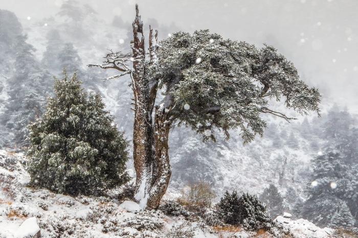 Manuel Enrique Gonzalez · CHRISTMAS TREE