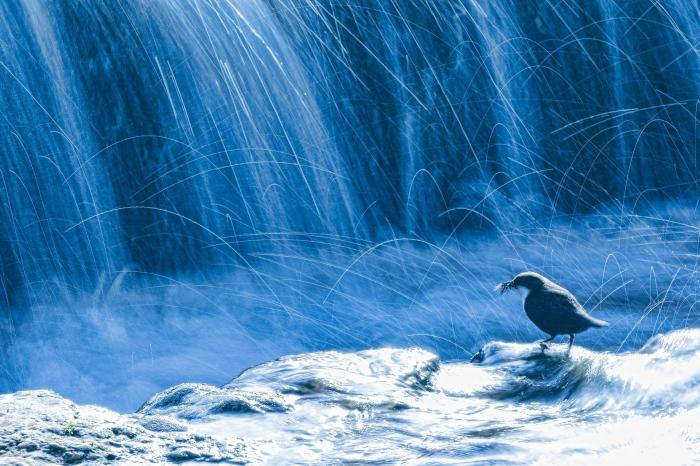 Mario Suarez · Water bird