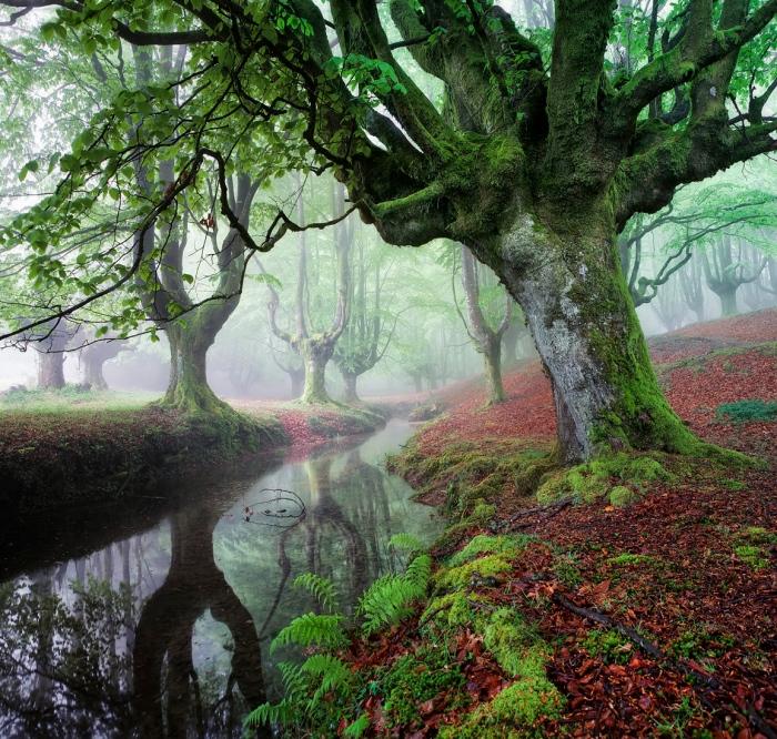 otzarreta, Gorbea, Bosque, forest, hayas, hayedo, pirmavera, pais, vasco, niebla, fog, Pixelecta
