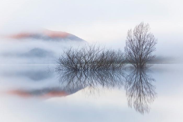 Lago, silencio, niebla, fog, arboles, lago, lake, montaña, palentina, pixelecta