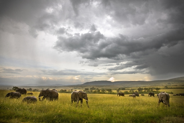 Roberto Iván Cano · Maasai Mara