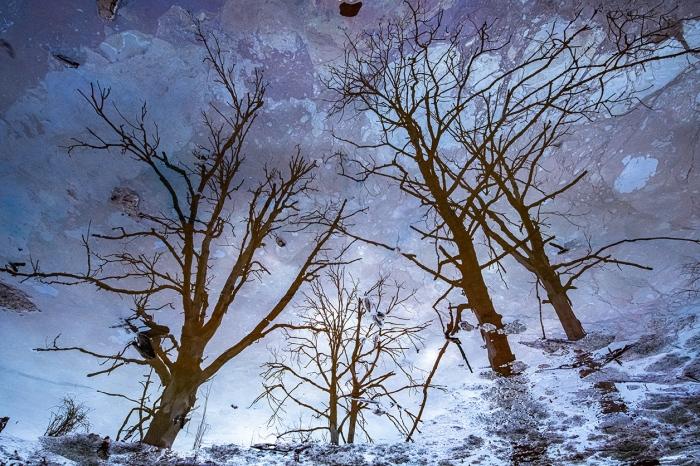 The Tree Sky