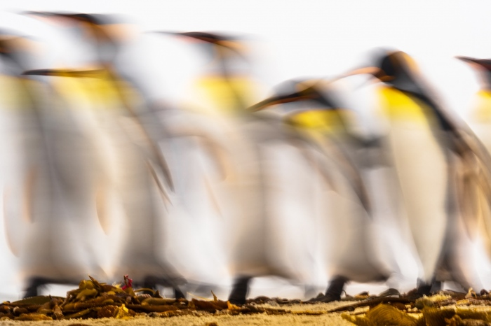 Penguin ether