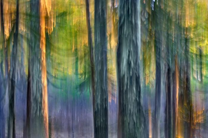 DARÍO PODESTÁ - Magic Forest I
