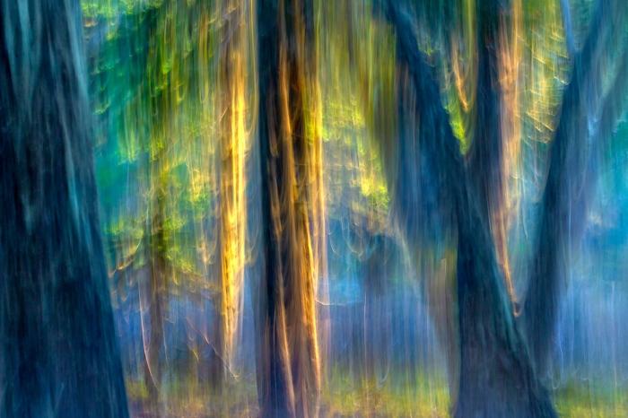 DARÍO PODESTÁ - Magic Forest II