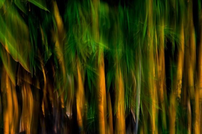 DARÍO PODESTÁ - Bamboo dreams
