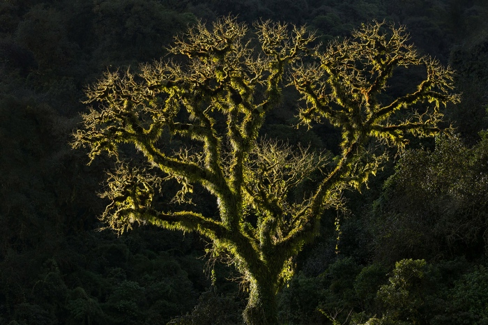 DARÍO PODESTÁ - Tree of Life