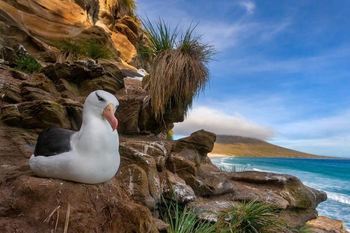 DARÍO PODESTÁ - Albatros paradise