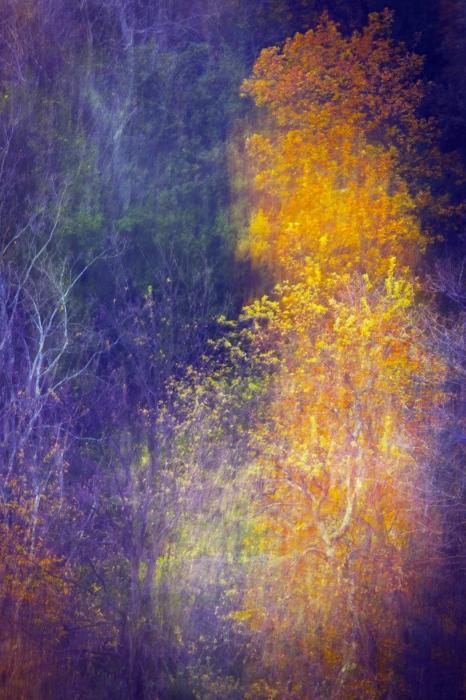 pintando el otoño