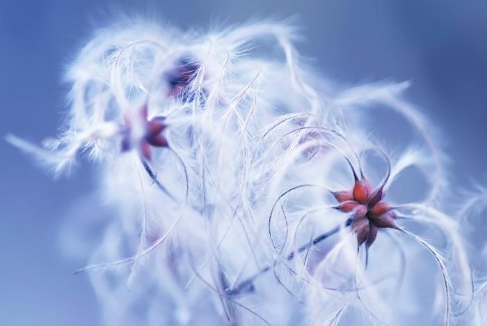 plumas al viento