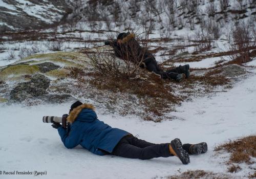 Fotografiando Renos en Brensholmen (Tromso). Noruega 2020