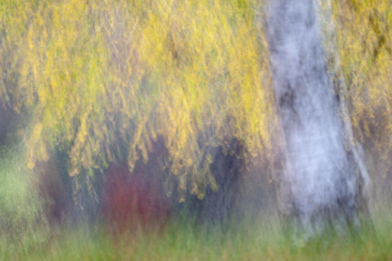 En moviment - Raül Carmona - Fotografia, Fotografia d'estudi, esdeveniments i Natura