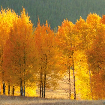 landscape, USA, united states, fall, grand teton national park