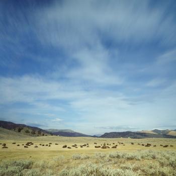 landscape, USA, united states, fall, yellowstone national park