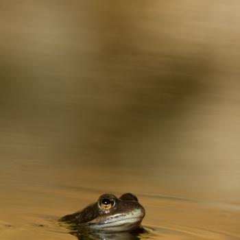 fauna salvatge, catalunya, fotògraf de fauna, fotògraf de natura, animal, foto animal, foto fauna