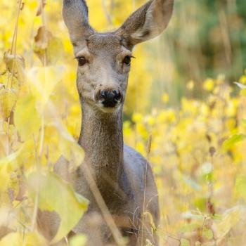 wildlife, usa, wildlife photographer, wilderness, animal, united states wildlife