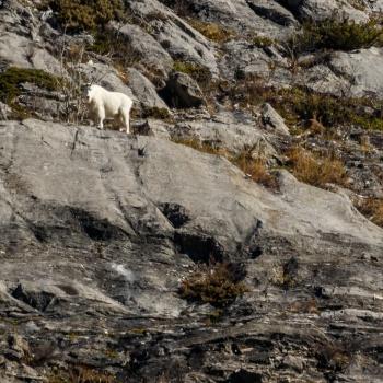 wildlife, canada, wildlife photographer, wilderness, animal, canadian wildlife