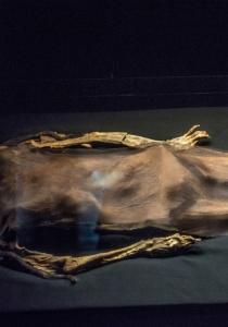 DSC_9914  Restos de La Señora de Cao, Museo de Cao,Perú