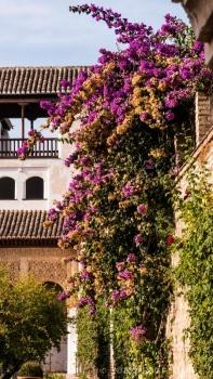 Jardines de la Alhambra en Granada