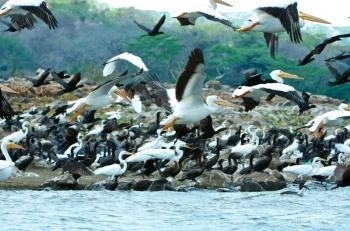 Isla Los Pajaros, Suchitoto