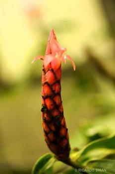 Reserva Monteverde en Costa Rica.