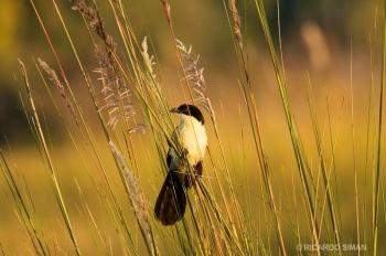 aves de sudafrica