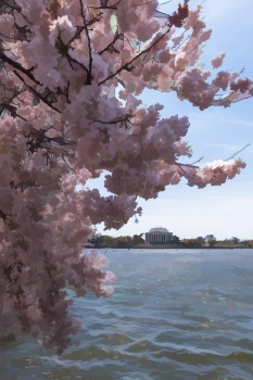 DSC_6732 Arbol de Cerezo, Monumento a Jefferson