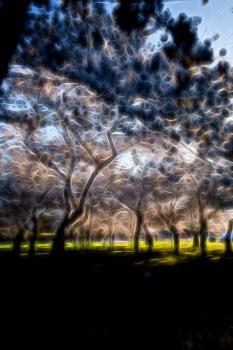 DSC_5133 Fantasía Arbol de Cerezo