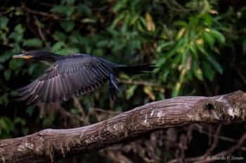 _DSC3638 Biguatinga o Carará,Brasil
