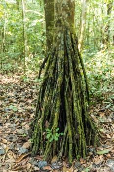 DSC_5761 Selva Amazonica,Brasil