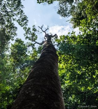 DSC_8881 Selva Amazonica,Brasil