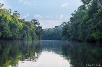DSC_8942 Selva Amazonica,Brasil
