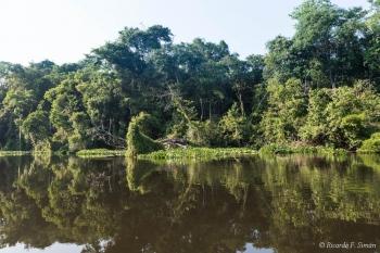 DSC_8959 Selva Amazonica,Brasil