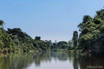 DSC_8975 Selva Amazonica,Brasil