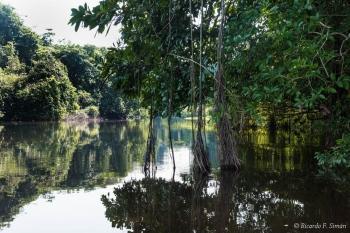 DSC_8978 Selva Amazonica,Brasil