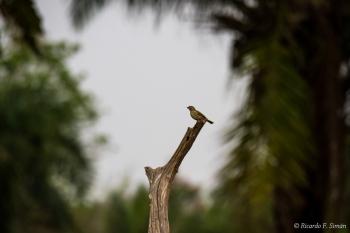 _DSC6494 Ave en El Pantanal