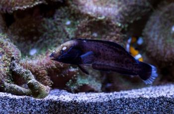 DSC_9789 Pez de Arrecife