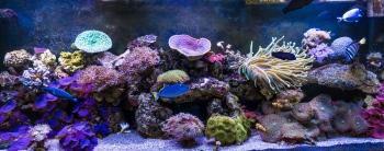 DSC_9932 Peces de Arrecifes