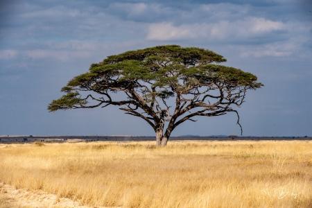 _DSC2525 Africa, Africa V, Ambosseli, Kenya, Paisajes.jpg